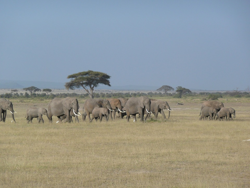 Elephant, Kenya, Wild, Wildlife, Africa, Animal, Travel