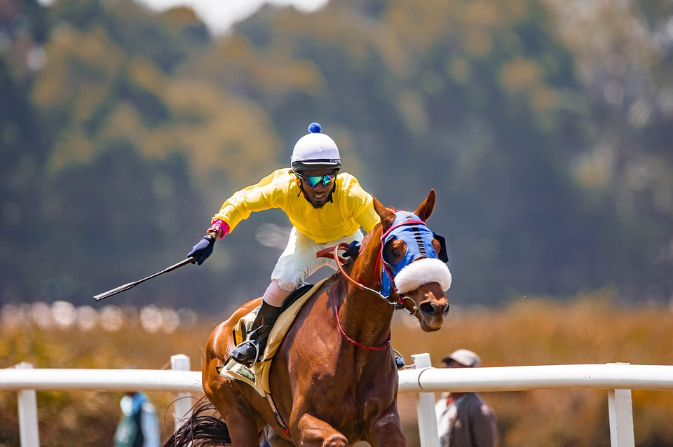 Horse, Race, Speed, Animal, Equestrian, Competition