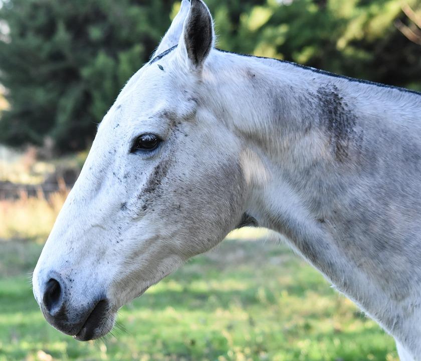 Equine, Animal, Four Legged, Meek