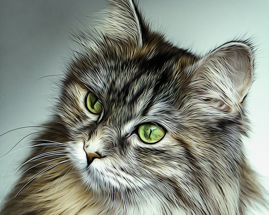 Cat, Feline, Eyes, Green, Long Hair, Animal, Pet