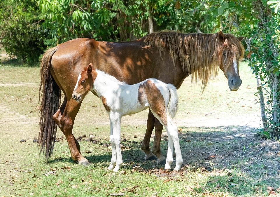 Foal, Horse, Mother, Pasture, Animal, Farm, Mammal