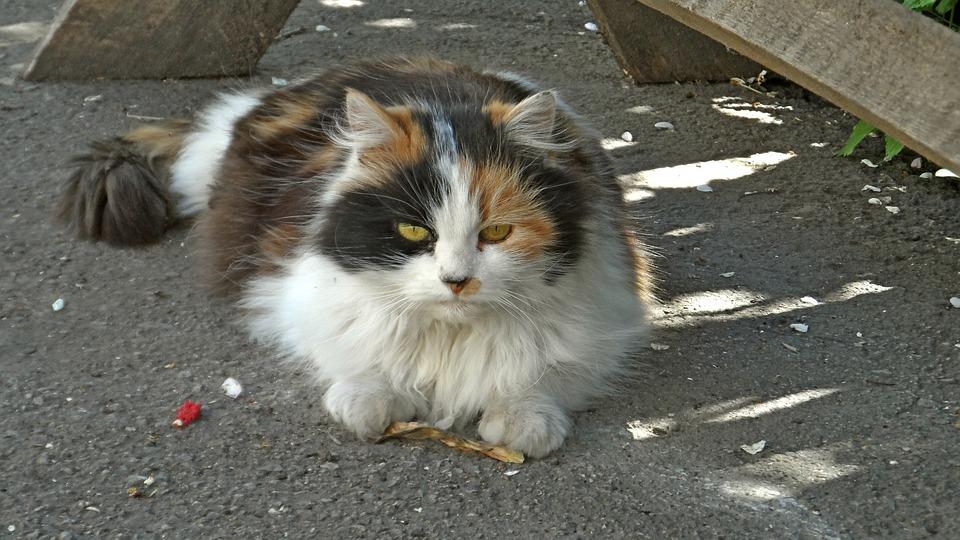 Fauna, Cat, Animal