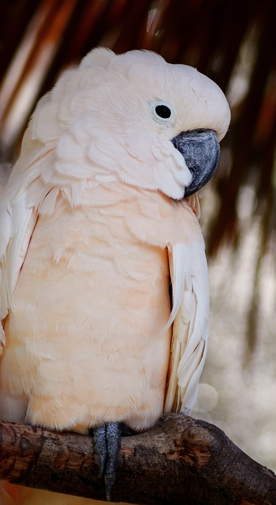Bird, Animal, Cockatoo, Exotic, White, Feather, Zoo