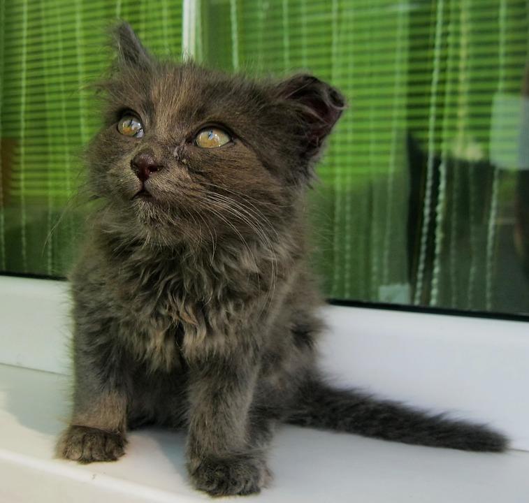 Kitten, Small, Cat, Cute, Young, Animal, Feline, Kitty