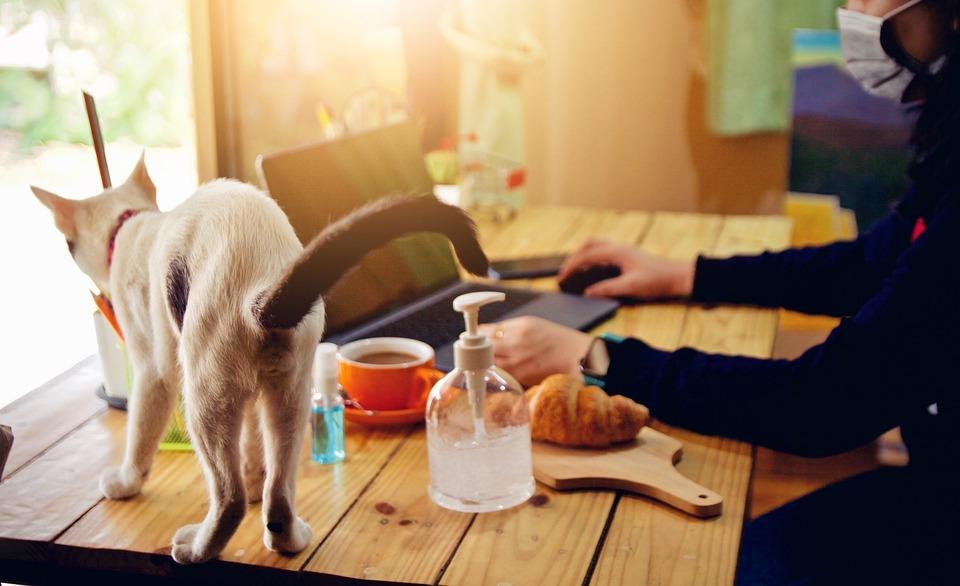 Cat, Table, Work, Pet, Animal, Feline, Mammal, Busy