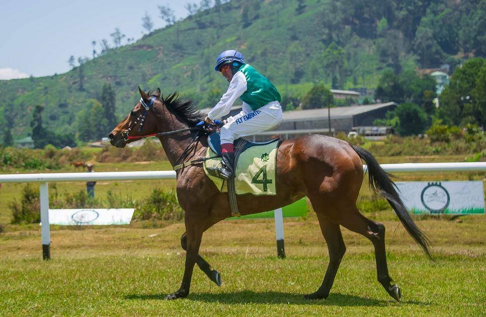 Finish Line, Race, Horse, Animal, Equestrian