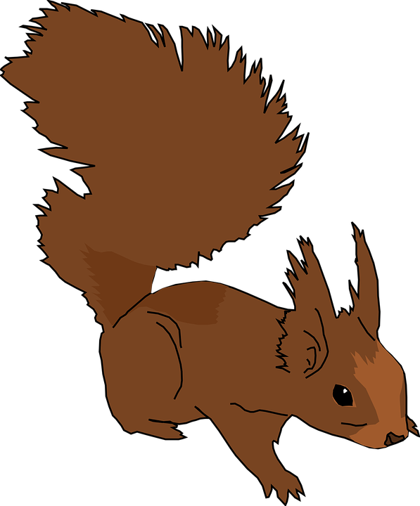 Squirrel, Animal, Cute, Rodent, Fluffy, Tail