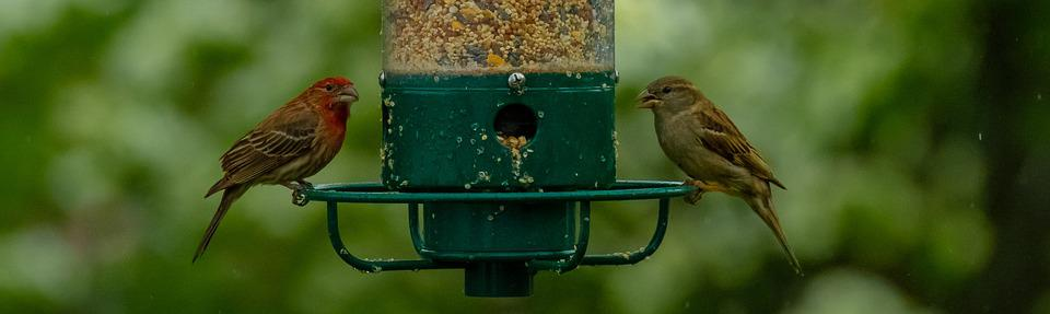 Birds, Bird Feeder, Feeder, Wildlife, Animal, Food