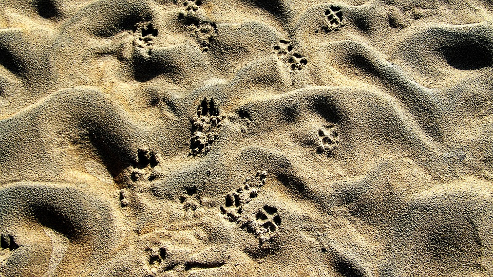 Drava, Shelf, Animal Footprints, Gray Sand