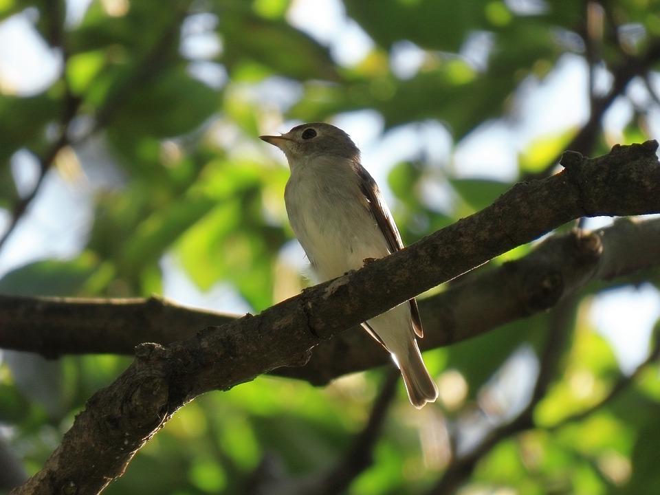 Animal, Forest, Wood, Green, Bird, Wild Birds