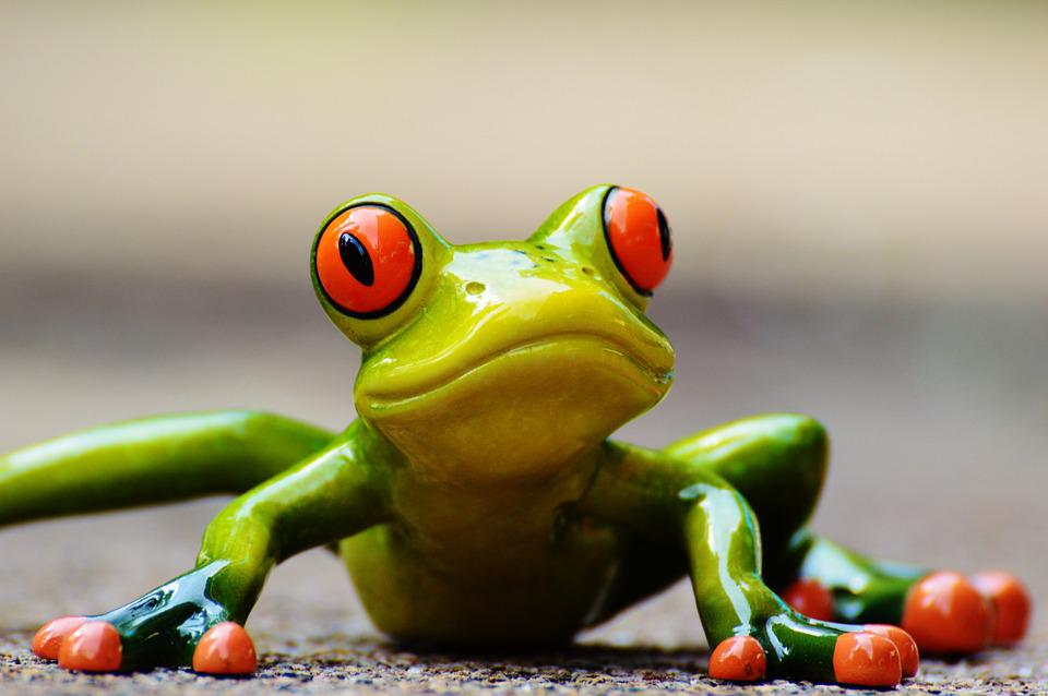 Frog, Funny, Fig, Cute, Animal, Fun, Green, Sweet