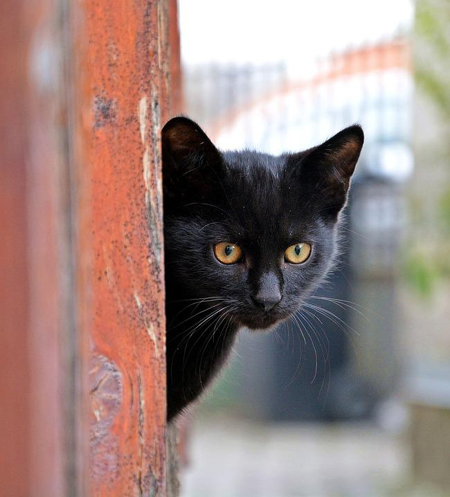 Cat, Animal, Fur, Cute, Kitten