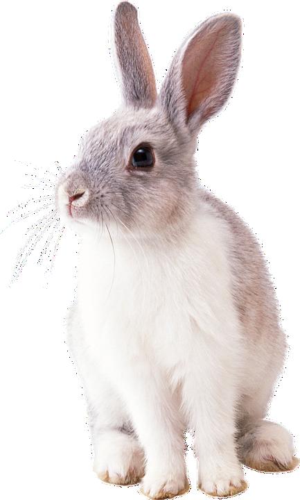 Rabbit, Animal, Nature, Fur, Ears, Pet