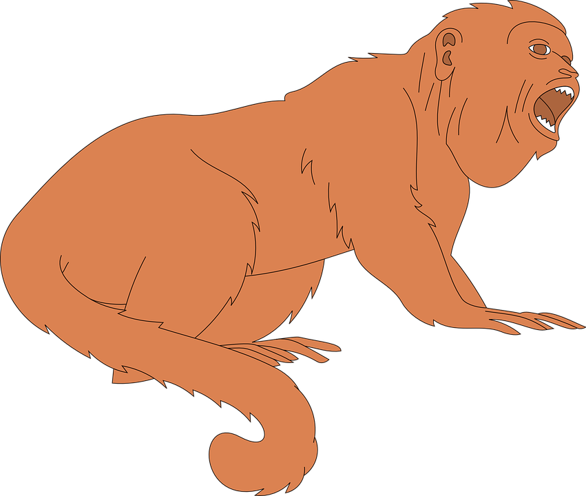 Monkey, Mouth, Open, Animal, Tail, Fur, Mouthed