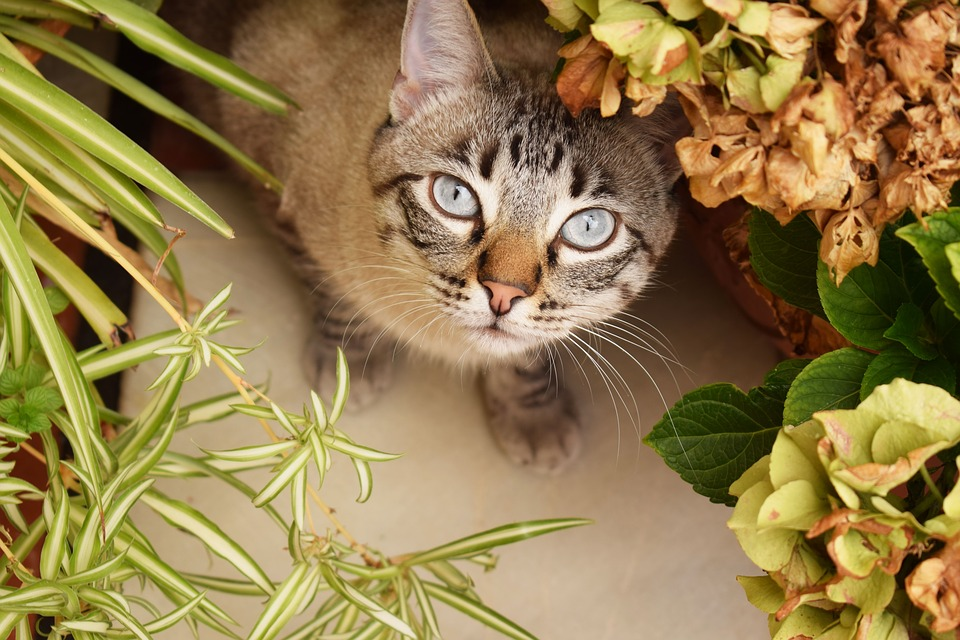 Cat, Flower, Patio, Plants, Garden, Animal, Flowers