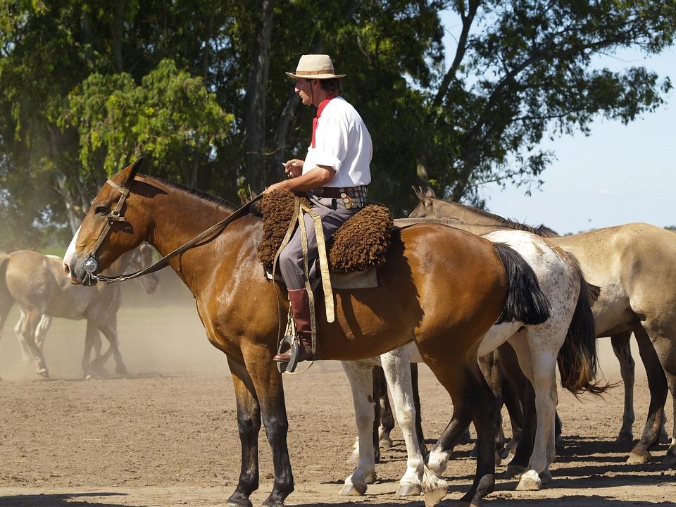 Horses, Argentina, Gaucho, Animal, Stallion, Wild, Farm