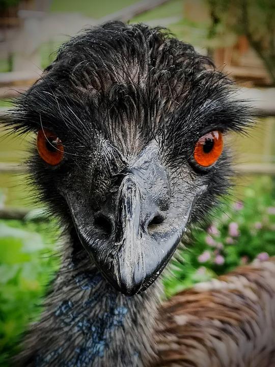 Bird, Animal, Go Vegan, Vegan, Pen, Animals, Feathers