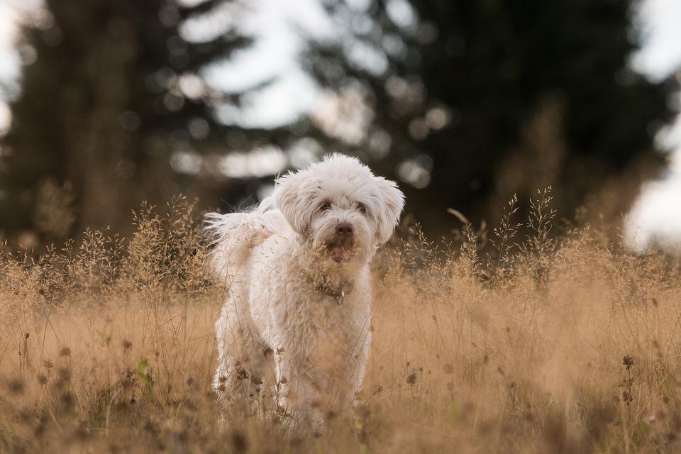 Dog, Grass, Autumn, White, Animal