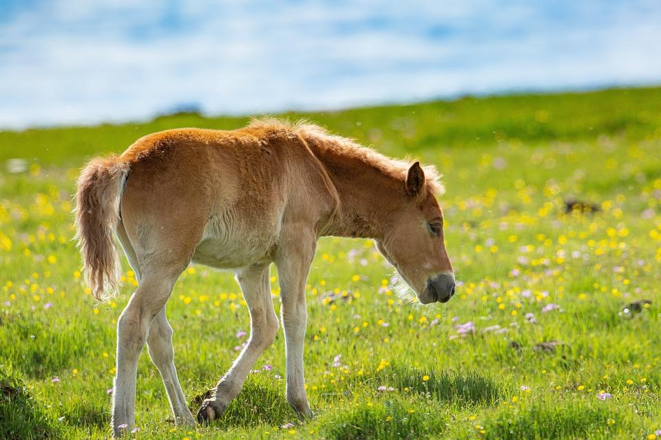 Horse, Animal, Graze, Field