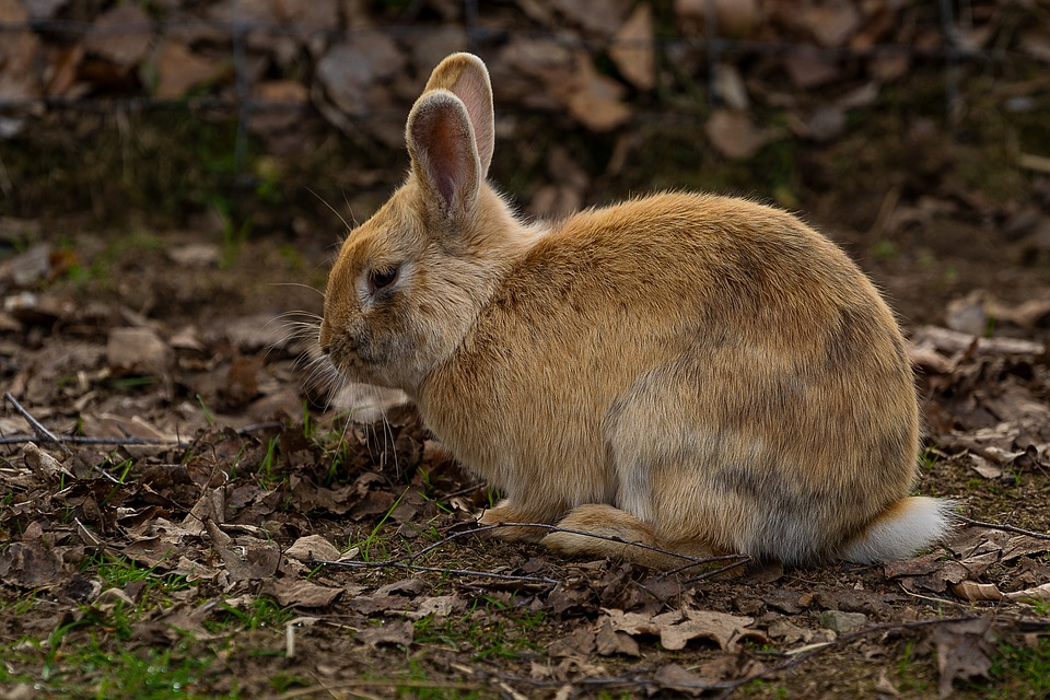 Animal, Mammal, Hare, Nature, Animal World, Head, Pet