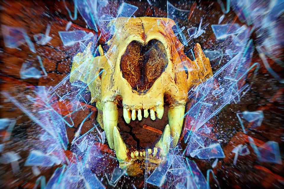 Animal Head, Prehistoric, Glass Breakage, Collage