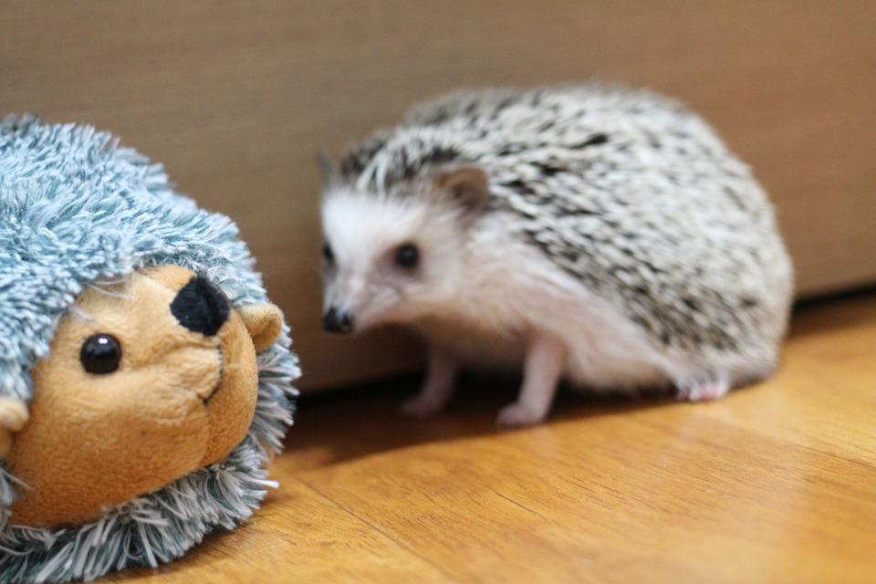 Hedgehog, Doll, Toy, Animal