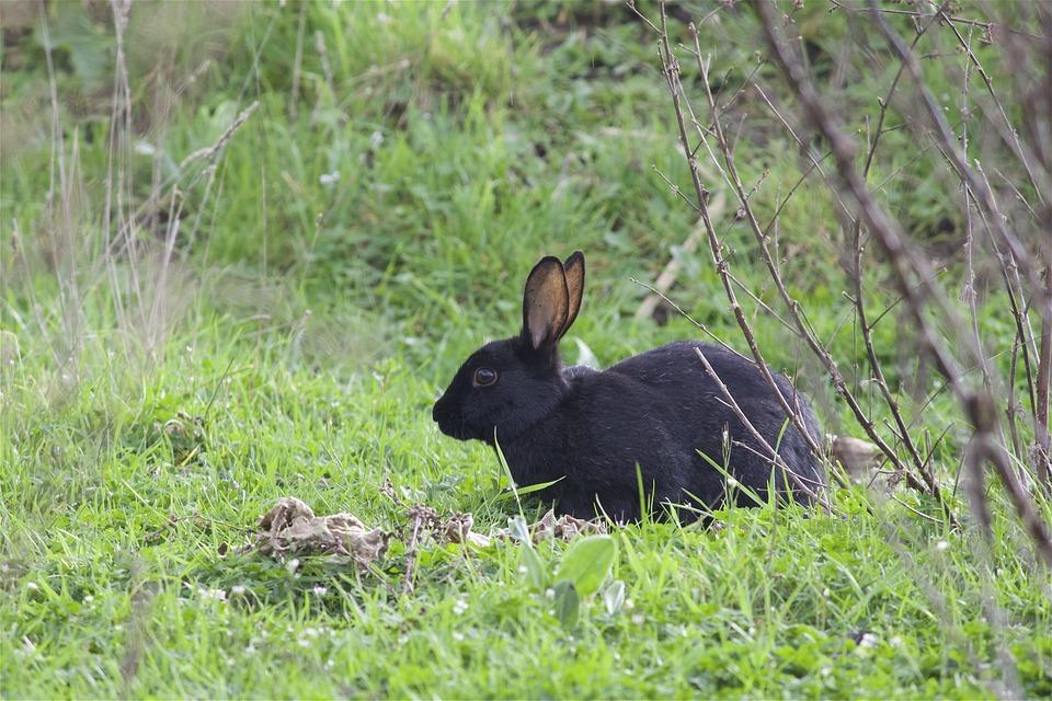Wild Rabbit, Forest, Animal, Nature, Hidden