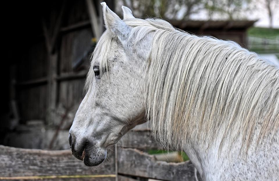 Mold, Horse, Animal Photography, Horse Head, Animal
