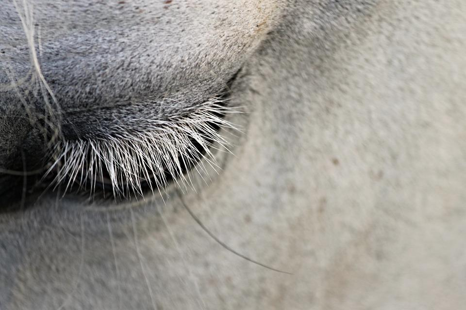Eye, Eyelashes, Horse, Animal, Close Up, Eyelid, View