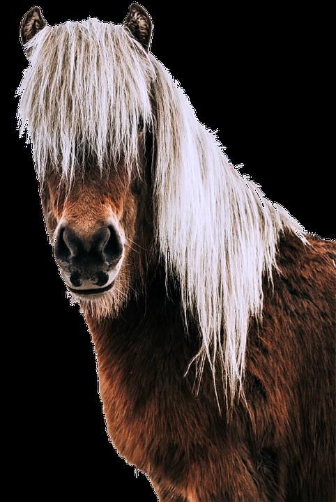 Isolated, Horse, Animal, Animal Portrait, Horse Head