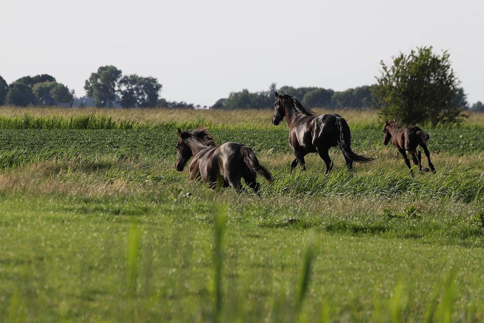 Horse, Horses, Foal, Nature, Animal, Animals, Pasture