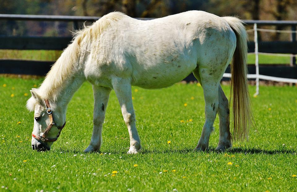 Horse, Meadow, Coupling, Animal, Nature, Ride, Pasture