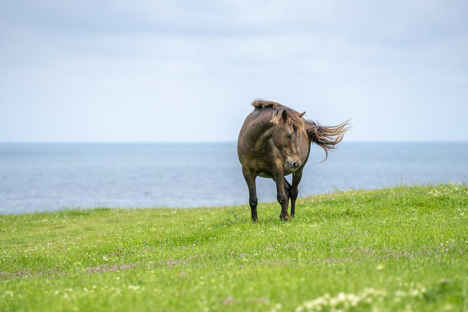 Wild Horse, Horse, Horses, Wild, Animal, Nature