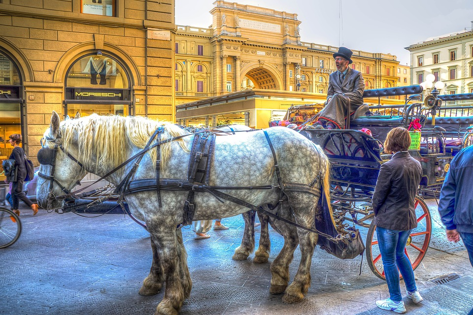 Florence, Italy, Horses, Horse And Cart, Animal