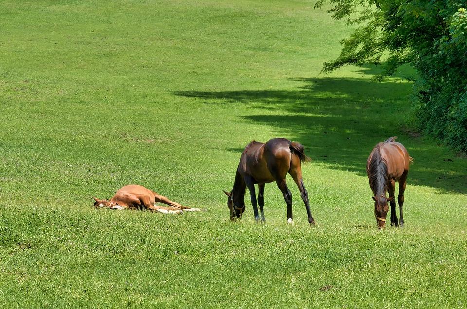 Horses, Fields, Animal, Nature, Equine, Rural, Pasture