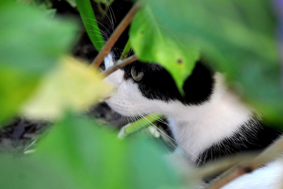 Cat, Hunting, Animal, Mieze, Domestic Cat