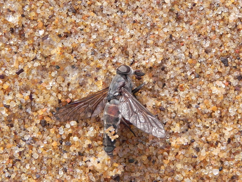 Fly, Dead, Sand, Insect, Death, Macro, Animal, Pest