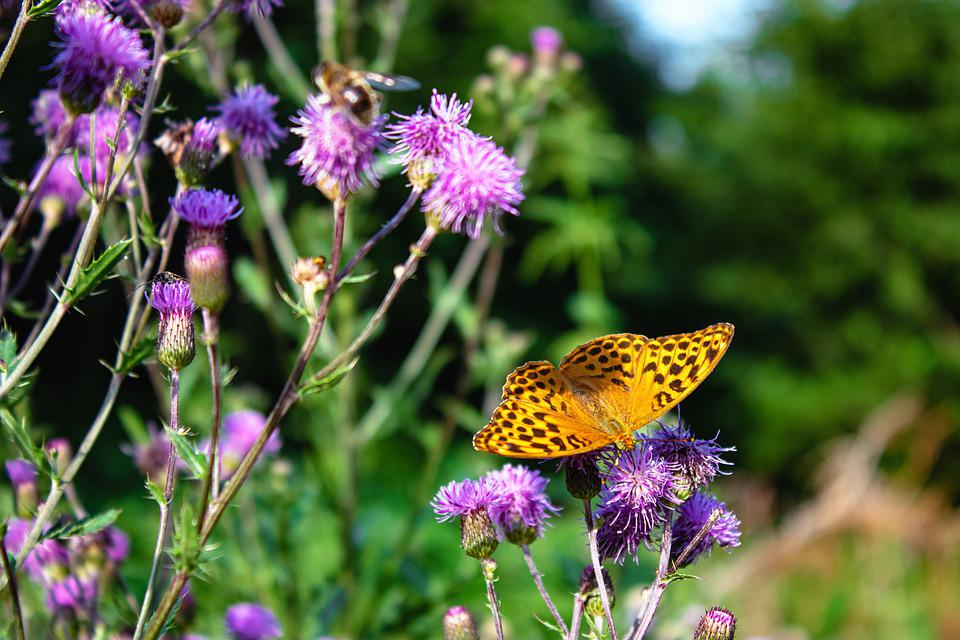 Butterfly, Insects, Nature, Animal, Flower, Wings