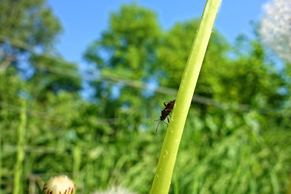 Free photo Animal Invertebrates Hexapod Insect Antennae