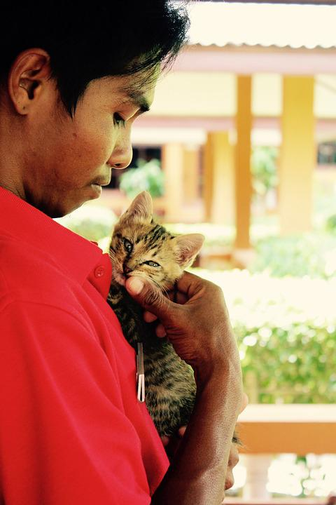 Cat, Kitten, Cat Baby, Cute, Pet, Domestic Cat, Animal