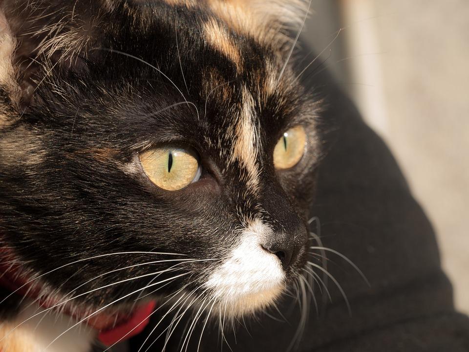 Cat, Eyes, Animal, Fur, Feline, Kitten, Domestic, Kitty