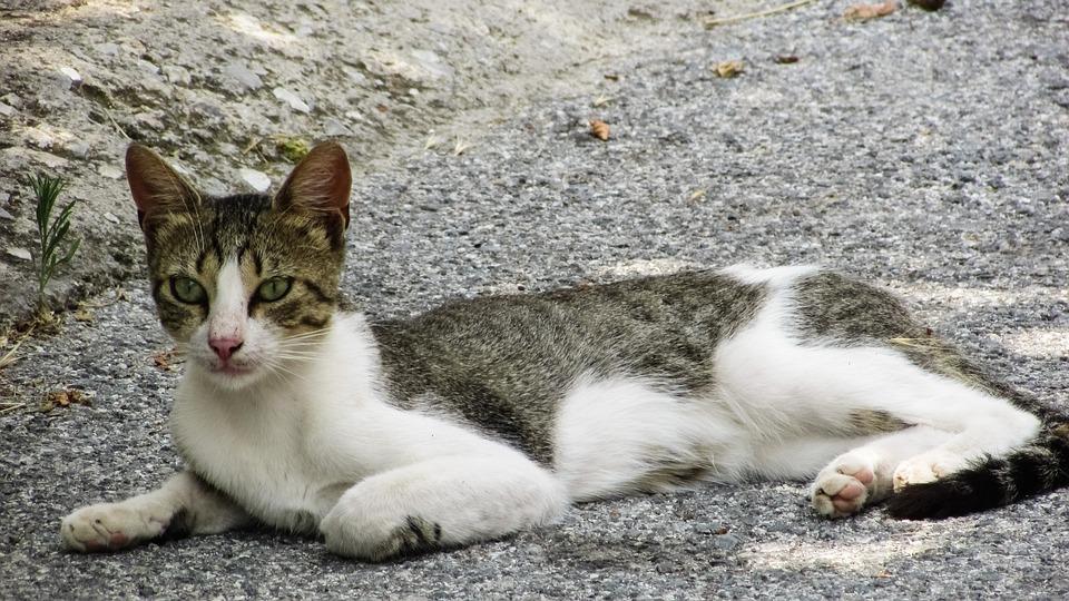 Cat, Stray, Looking, Animal, Kitten, Kitty, Outdoor