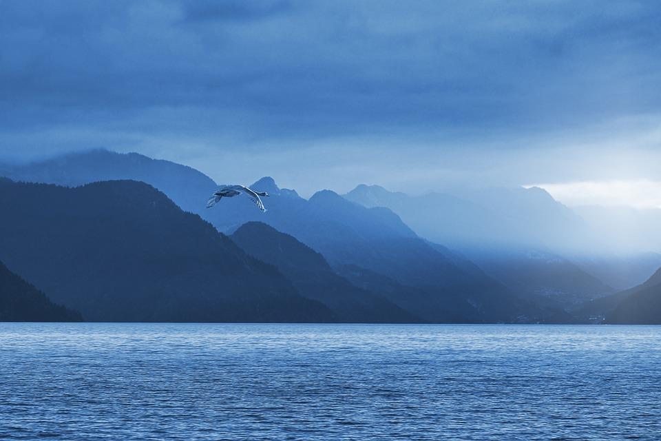 Lake, Nature, Landscape, Mountains, Alpine, Animal