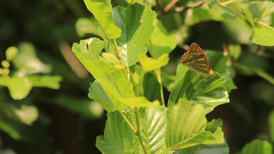 Butterfly, Leaves, Insect, Leaf, Animal, Wing