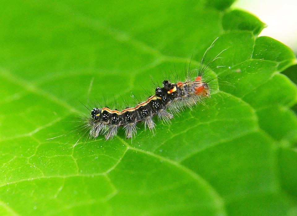 Caterpillar, Leaf, Pest, Damage, Animal, Nature, Green