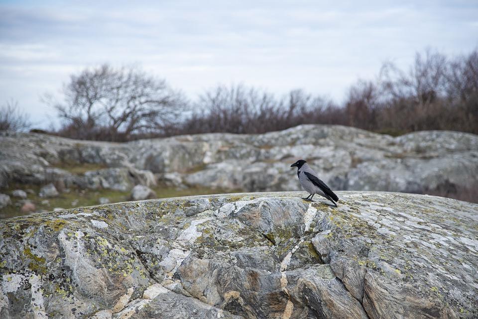 Crow, Bird, Cliffs, Coastal, Black, Animal Life, Nature