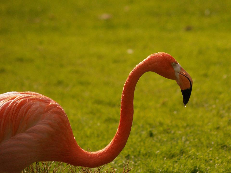 Flamingo, Pink, Hiking, Animals, Animal Life, Zoo