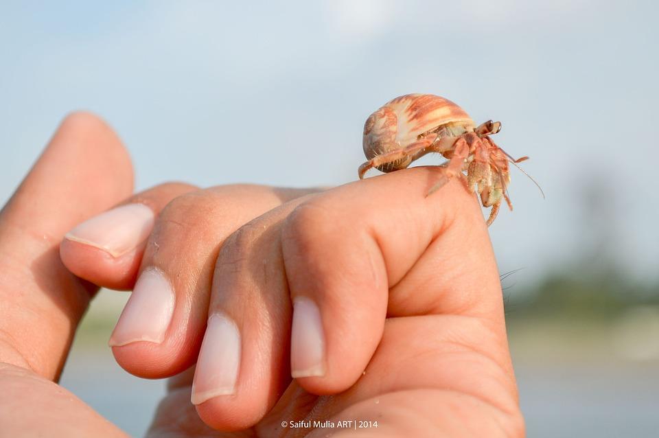 Hermit Crab, Crab, Little, Cute, Animal, Sea Life, Hand