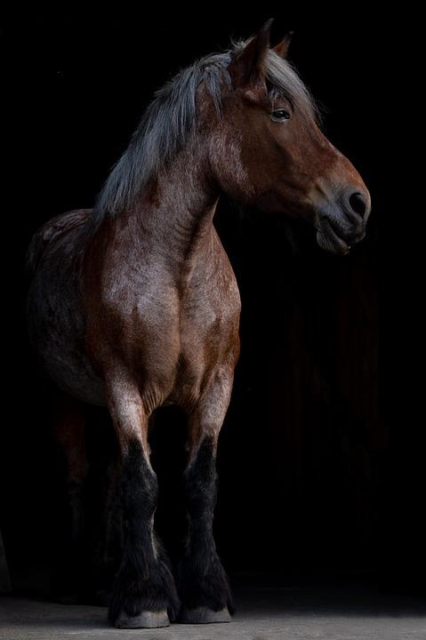Horse, Horse Head, Livestock, Strong, Animal, Mare