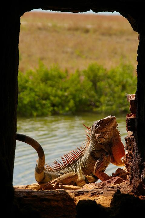 Lizard, Animal World, Nature, Reptile, Animal, Reptiles